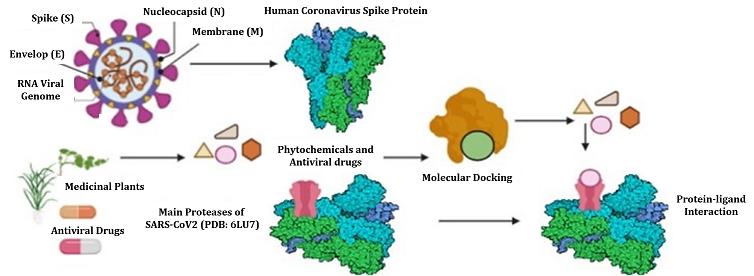 COVID-19 drug molecular modeling