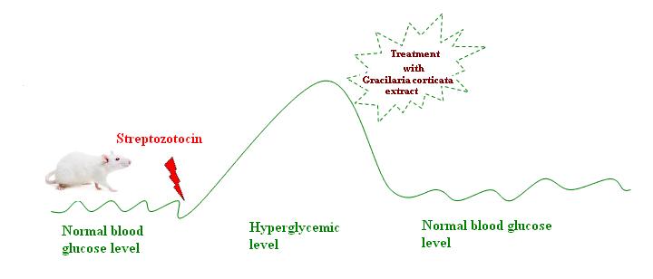 anti-diabetic activity of Gracilaria