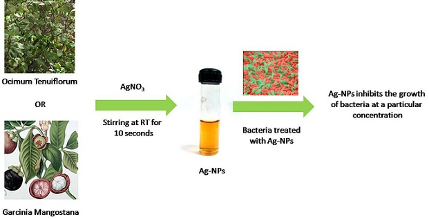 silver nanoparticle synthesis by plants