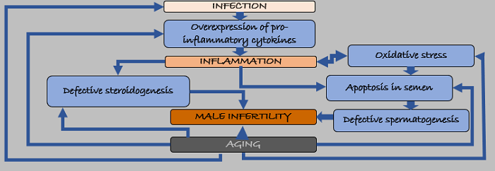 aging and infertility relation