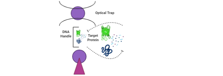 Corona virus trap optical tweezers
