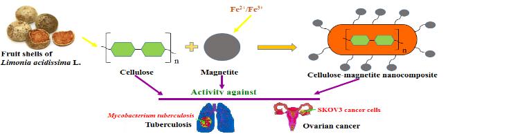 cellulose-magnetite nanocomposite