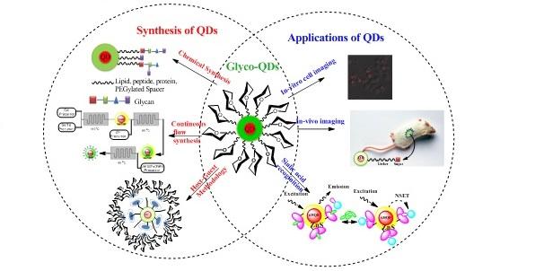 Glyco-Quantum Dots