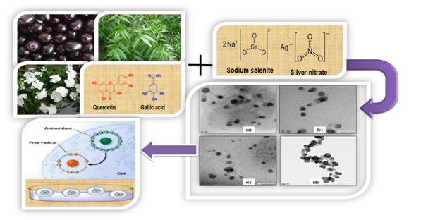 silver-selenium nanoparticles