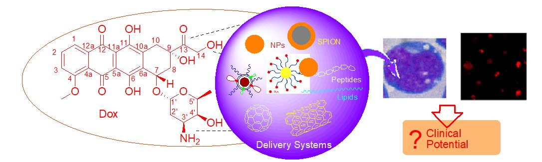 Doxorubicin delivery systems